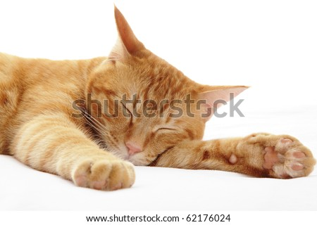 Ginger cat sleeping on bed - stock photo