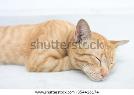 Ginger cat sleeping on the white background floor - stock photo