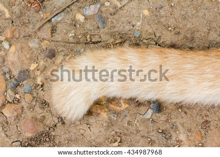 Ginger cat tail on the ground