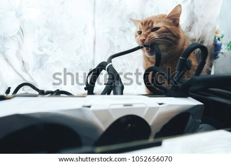 Ginger Cat Tries Bite Wires On Stock Photo (Download Now) 1052656070 ...