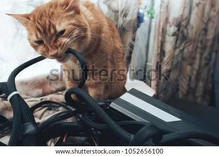 Ginger Cat Tries Bite Wires On Stock Photo (Royalty Free) 1052656100 ...