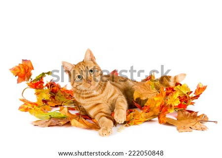 Ginger cat with autumn leaves against a light background - stock photo