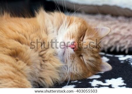 Ginger cute cat sleeping at home