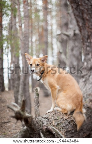 Ginger dog sitting on a tree. Shallow depth of field, selective focus. - stock photo