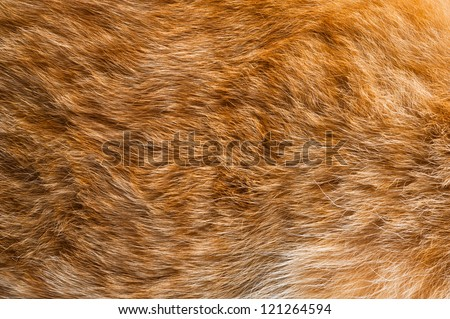 ginger fur background - stock photo