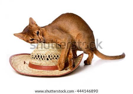 Ginger kitten Abyssinian cat and hat (isolated on white)