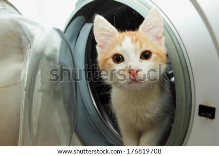 Ginger kitten climbed into the washing machine and looks out of her - stock photo