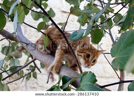 Ginger kitten climbs down from the tree - stock photo