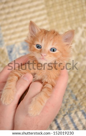 Ginger kitten cradled in hands with quilted background - stock photo
