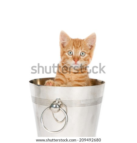 Ginger kitten in an empty ice bucket, isolated on white