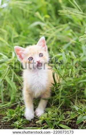 ginger kitten in the grass