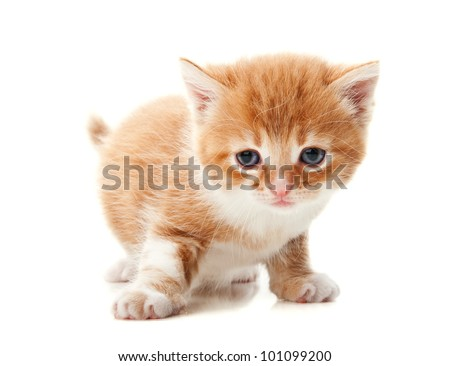 ginger kitten isolated on a white background - stock photo
