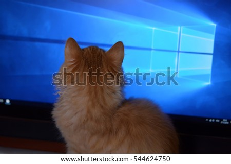 ginger kitten looks at the monitor of the computer