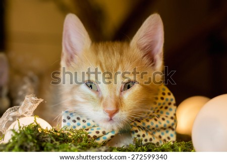 Ginger kitten with a bow tie looking at the camera