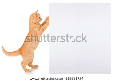 Ginger kitten with a sheet of paper - stock photo