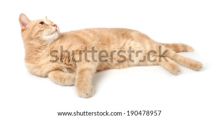 Ginger lying cat, looking up. Isolated on white