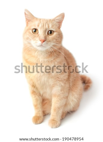 Ginger sitting cat, looks ahead. Isolated on white - stock photo