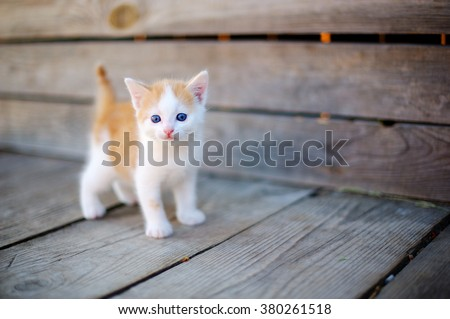 ginger small kitten playing in the street - stock photo