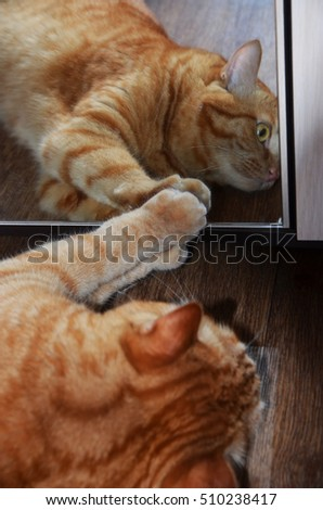 ginger tabby cat looking at her reflection in the mirror
