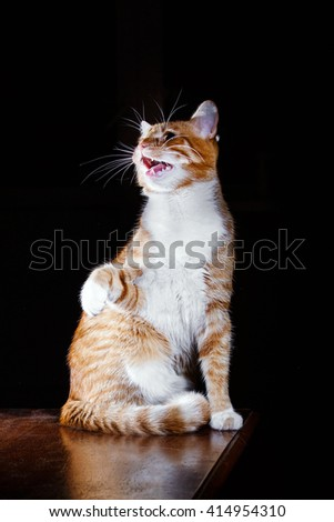 Ginger tabby cat say meow  - stock photo