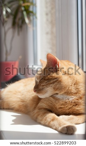 Ginger tomcat basking in the sun on the window