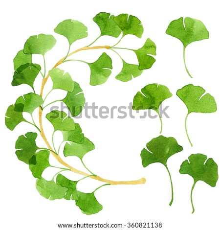Ginkgo biloba branch and leaves painted with bright green watercolor. Traditional medicine plant, living fossil. Botanical illustration. Green and fresh spring leaves. Real watercolor painting. - stock photo