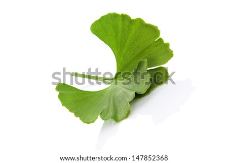 Ginkgo biloba leaf isolated on white background with reflection. Healthy, long, prosperous living concept. Natural food supplement. - stock photo