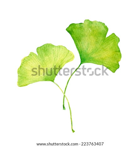 Ginkgo Leaves Water Color