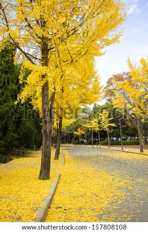 Ginkgo Tree in Autumn at Osaka Castle's Garden - stock photo