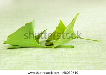 Ginko leaf isolated on green background. Natural supplement. Healthy living. - stock photo