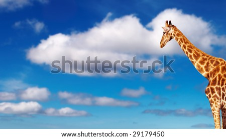 Giraffe against blue sky background - stock photo