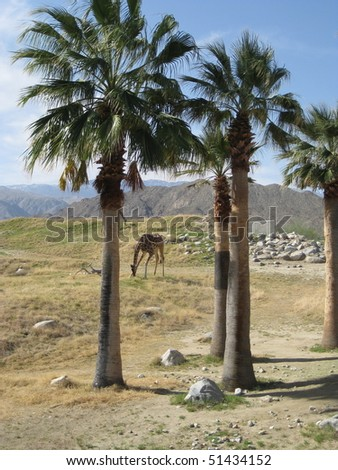 Giraffe Among Palm Trees - stock photo