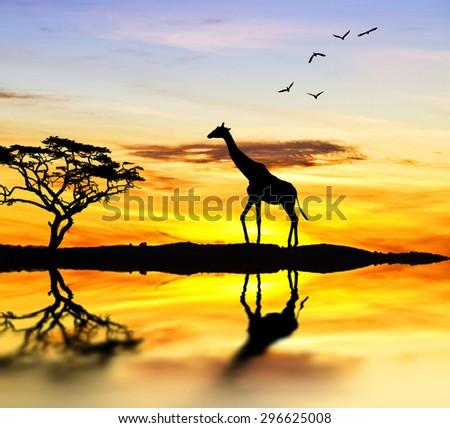 Giraffe at Lake - stock photo