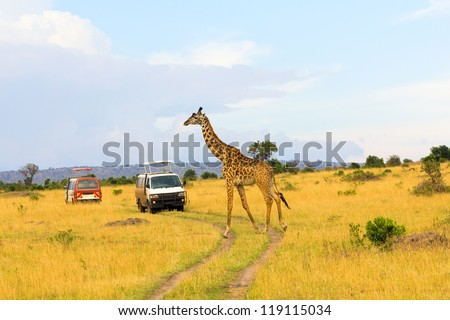 Giraffe crossing the road in Masai Mara National Reserve, Kenya - stock photo
