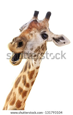 Giraffe Stock Images Royalty Free Images Amp Vectors