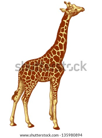 giraffe, illustration isolated in withe background