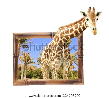 Giraffe in bamboo frame with 3d effect. Isolated on white background - stock photo