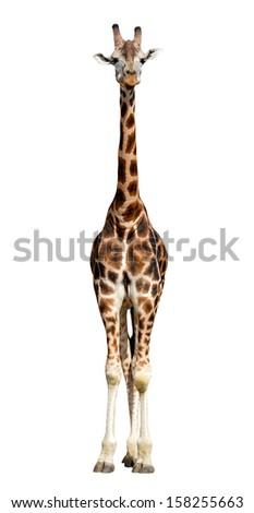 Giraffe Stock Images, Royalty-Free Images & Vectors ...   233 x 470 jpeg 16kB