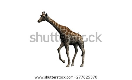 giraffe - isolated on white background