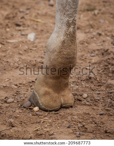 Giraffe leg close up shot
