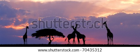 Giraffe sillhouetted with acacia tree against sunset - stock photo