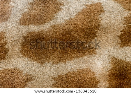 giraffe skin pattern - stock photo