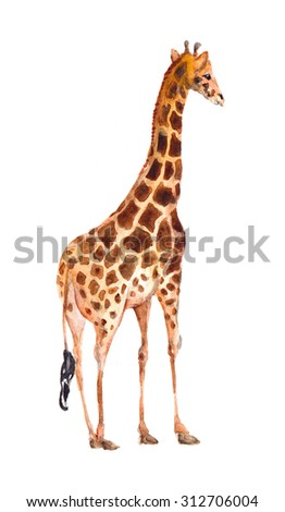 Giraffe. Watercolor