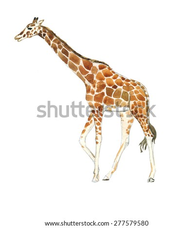 Giraffe. Watercolor sketch.
