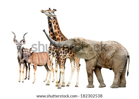 Giraffes, Kudu and Elephant - stock photo