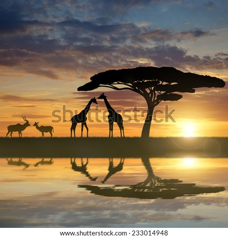 Giraffes with Kudu at sunset - stock photo