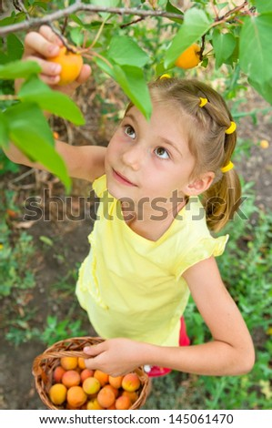 Girl breaks with fruit trees. Girl harvests - stock photo