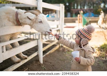 Girl feeds goats on a farm  - stock photo