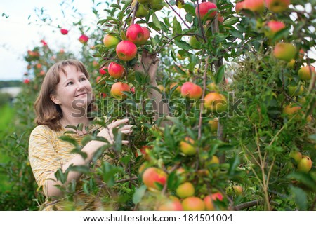 Girl gathering apples on a farm