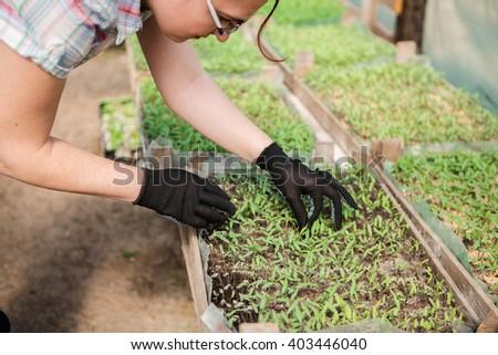 girl, greenhouse, seedlings,  seedling vegetables - stock photo